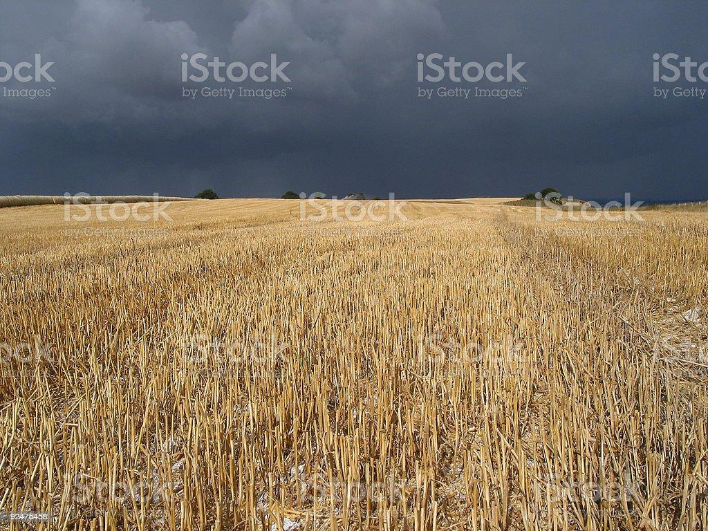 Crop field royalty-free stock photo