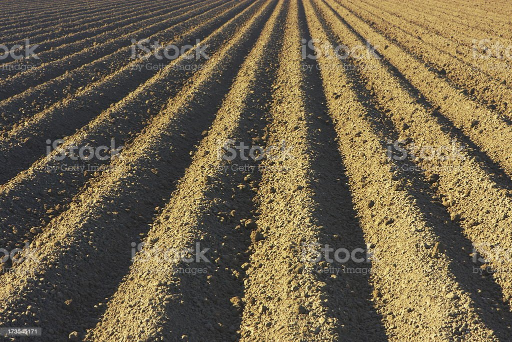 Crop Field Plowed Tilled Agriculture royalty-free stock photo