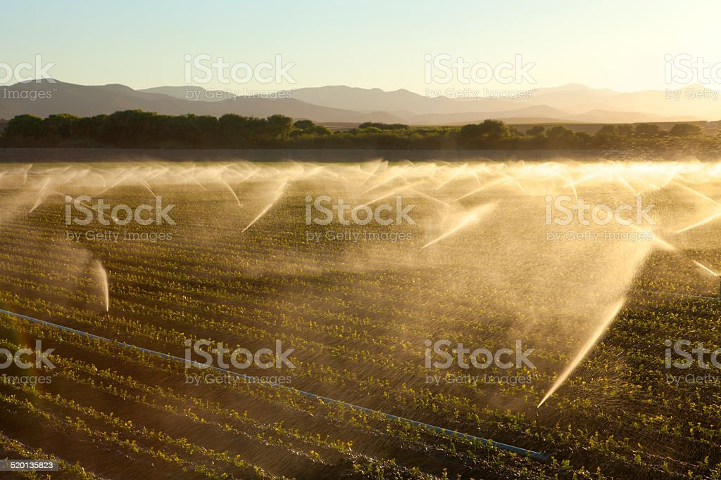Crop Irrigation In California's Central Valley stock photo