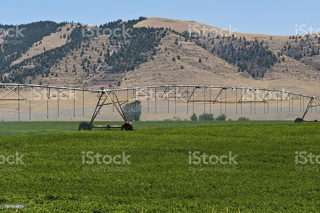 Crop Irrigation royalty-free stock photo
