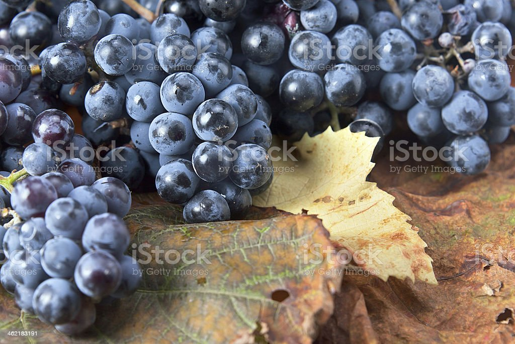 Production manufacturing grape Wines
