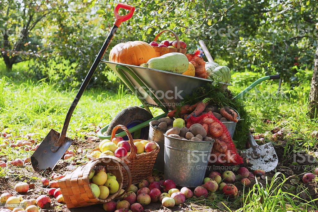 crop of vegetables in the garden stock photo