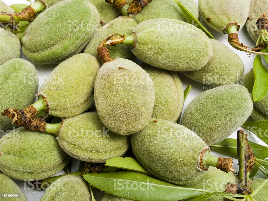 Crop of young unripe almonds nuts royalty-free stock photo