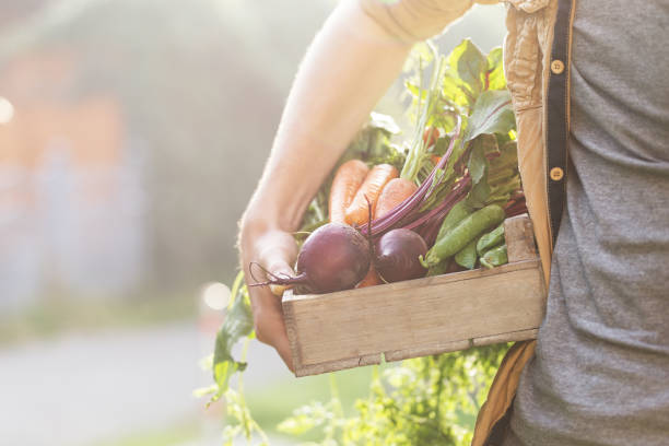 Crop person with box of vegetables stock photo