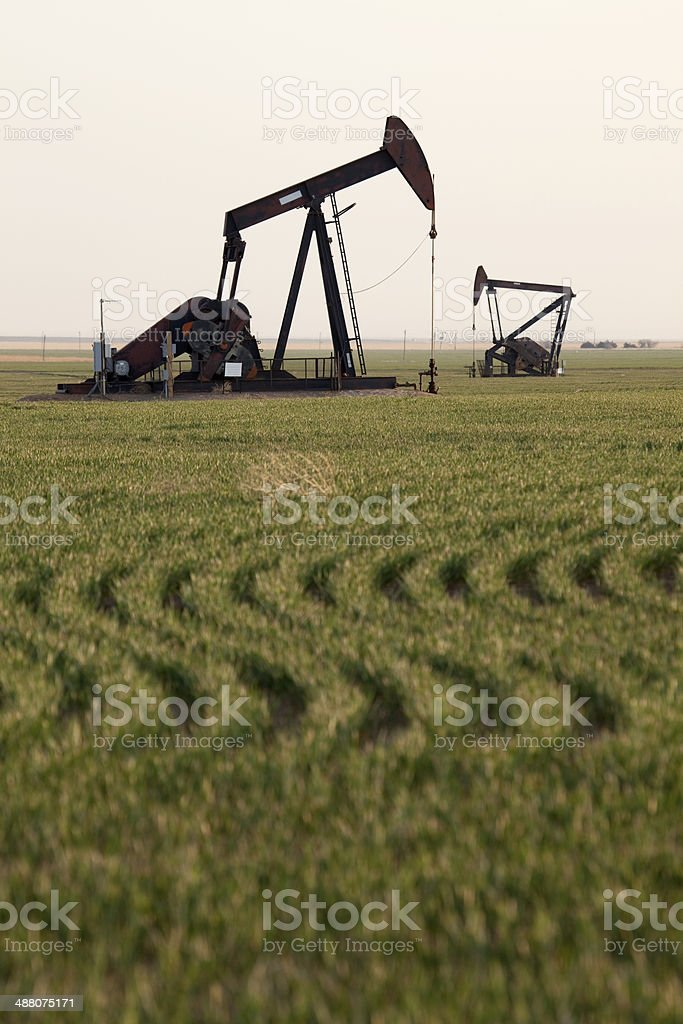 Crop rows and oil pumps western Kansas royalty-free stock photo