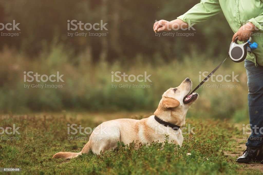 Crop shot of a woman training dog stock photo