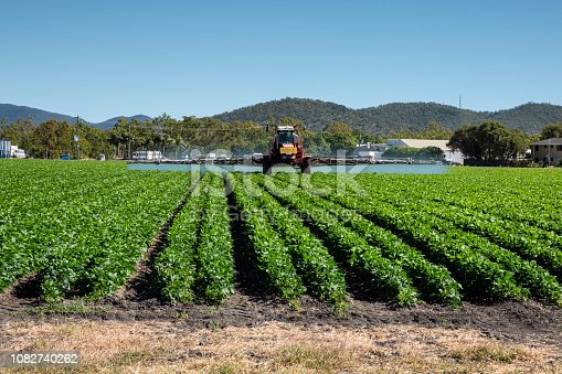 Spraying a vegetable crop near Bowen, Queensland. This is a rich agricultural area with broad acre crops of capsicums, tomatoes and other fruit and vegetables.