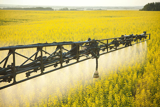 Crop Spraying in Canola Field Spraying Herbicides or Fungicides in Blooming Canola Crop.For more farming images... canola stock pictures, royalty-free photos & images