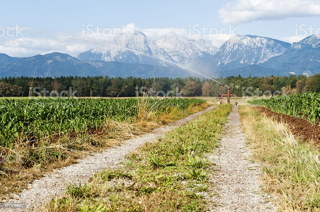 Crop watering stock photo