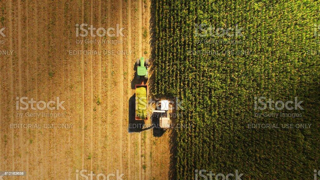 croping corn in italian province stock photo