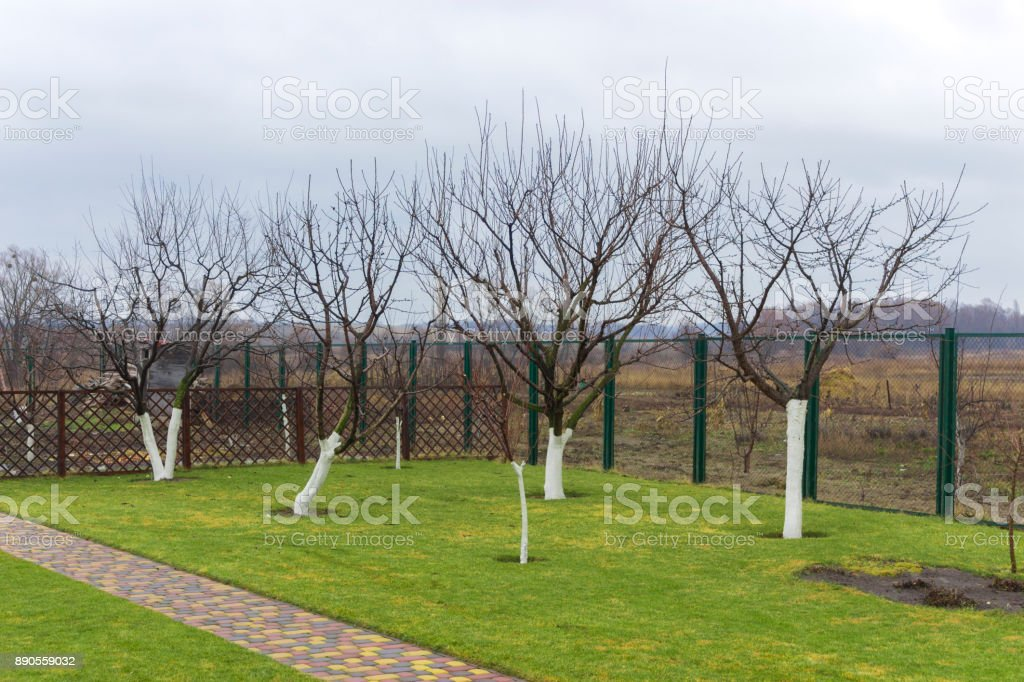 Cropped Fruit Trees In A Welltended Garden Stock Photo - Download Image Now  - iStock