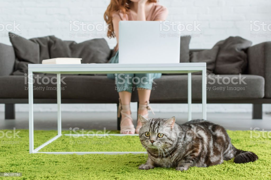 cropped shot of woman working with laptop while her cat lying on floor on foreground at home stock photo
