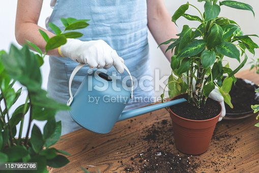 Cropped view of young gardener woman holding watering can in hands, pouring plant in new brown pot standing behind wooden table at home