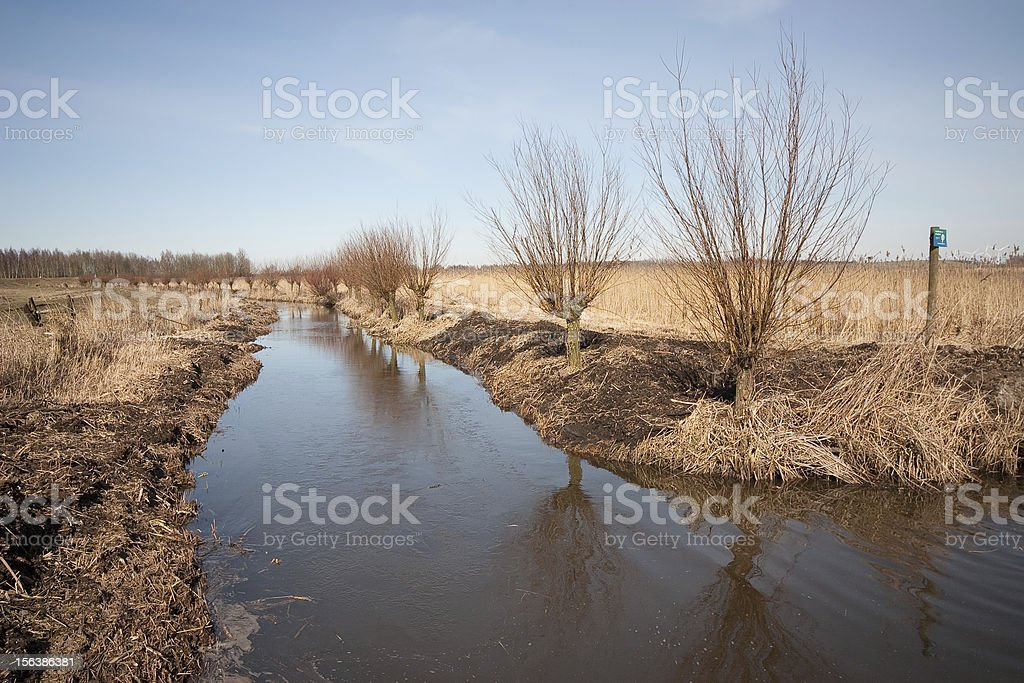 Cropped willow trees (Blaricum, the Netherlands) royalty-free stock photo