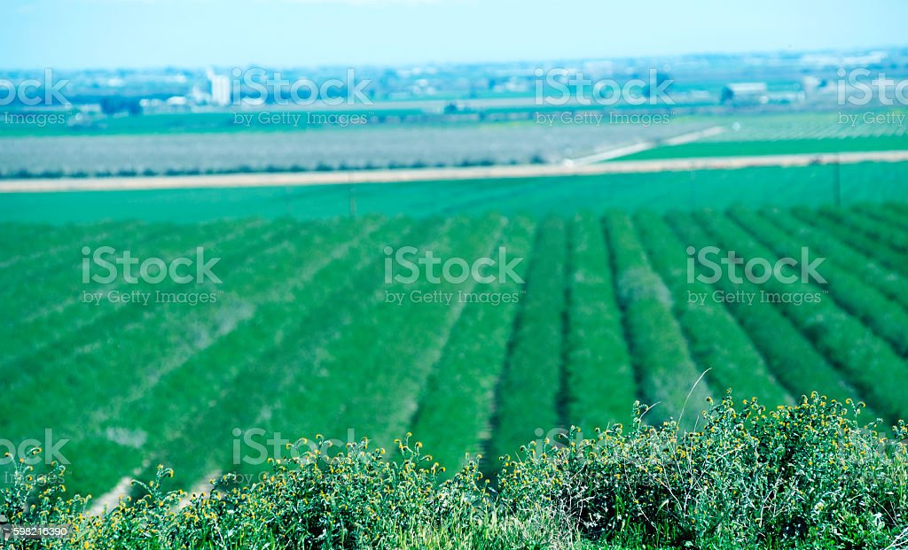 Crops at winter in San Joaquin Valley CA stock photo