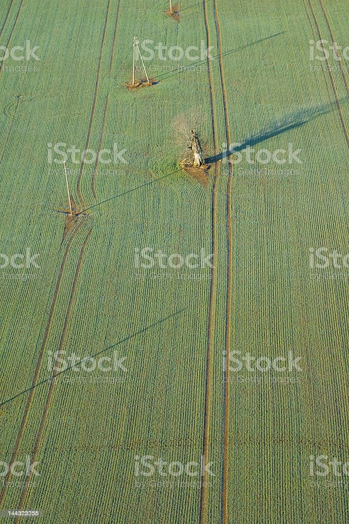 Crops field royalty-free stock photo