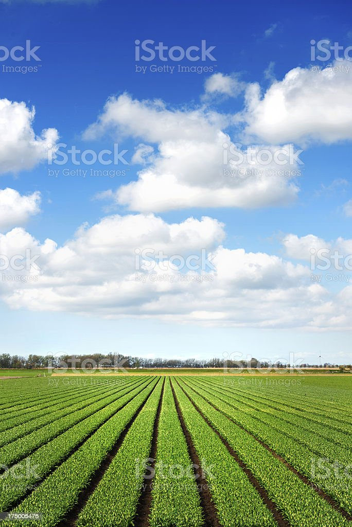 Crops Grow On Fertile Farm Field Land Stock Photo