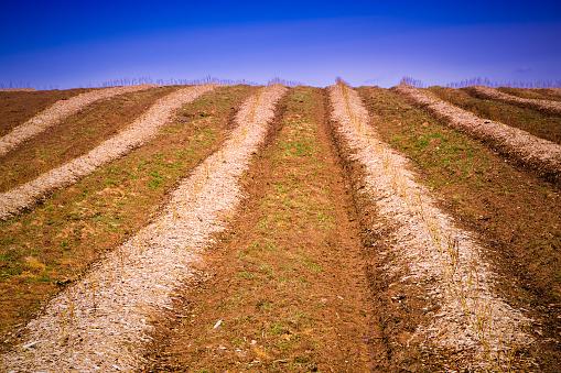 185274428 istock photo Crops Grow on Fertile Farm Field 530660905