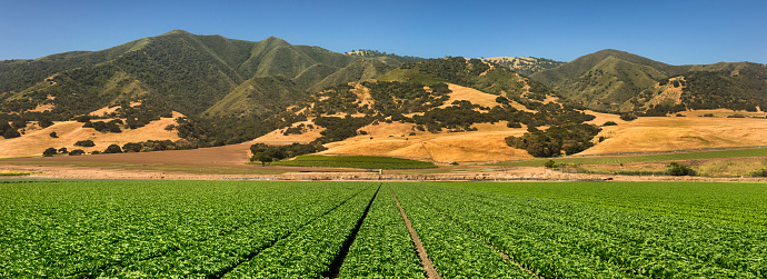 185274428 istock photo Crops grow on fertile farm land panoramic before harvest 937010916