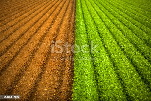 istock Crops grow on fertile farm land 155391580
