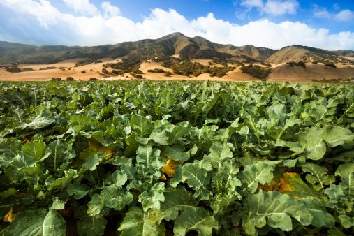 185274428 istock photo Crops grow on fertile farm land 171254591