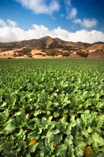 185274428 istock photo Crops grow on fertile farm land 175416538