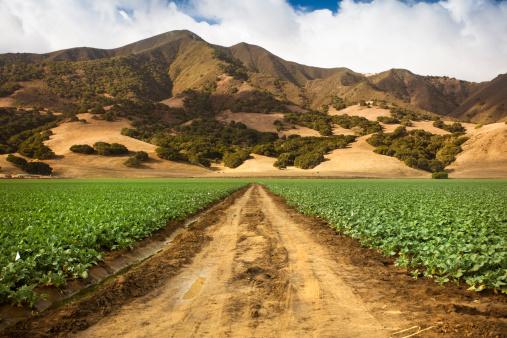 185274428 istock photo Crops grow on fertile farm land 175416541