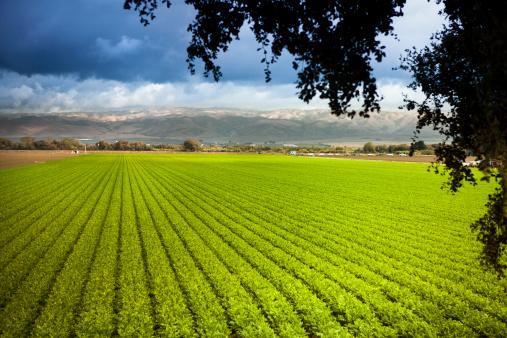 185274428 istock photo Crops grow on fertile farm land 175416546