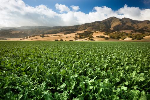 185274428 istock photo Crops grow on fertile farm land 175421625