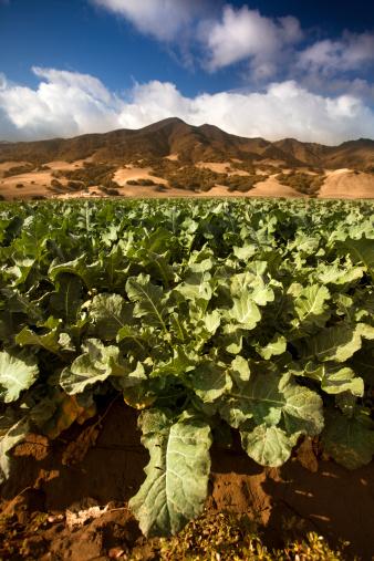 185274428 istock photo Crops grow on fertile farm land 175421628