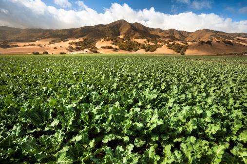 185274428 istock photo Crops grow on fertile farm land 175594742