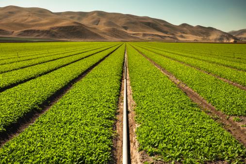 185274428 istock photo Crops grow on fertile farm land 185223235