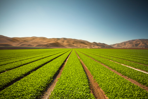 185274428 istock photo Crops grow on fertile farm land 185231578