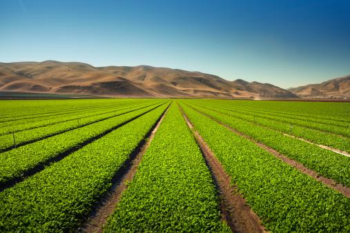 185274428 istock photo Crops grow on fertile farm land 185246188