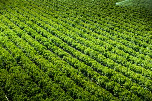 185274428 istock photo Crops grow on fertile farm land 185252114