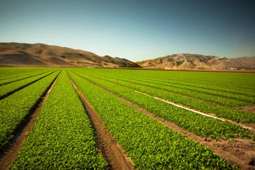 185274428 istock photo Crops grow on fertile farm land 185252504