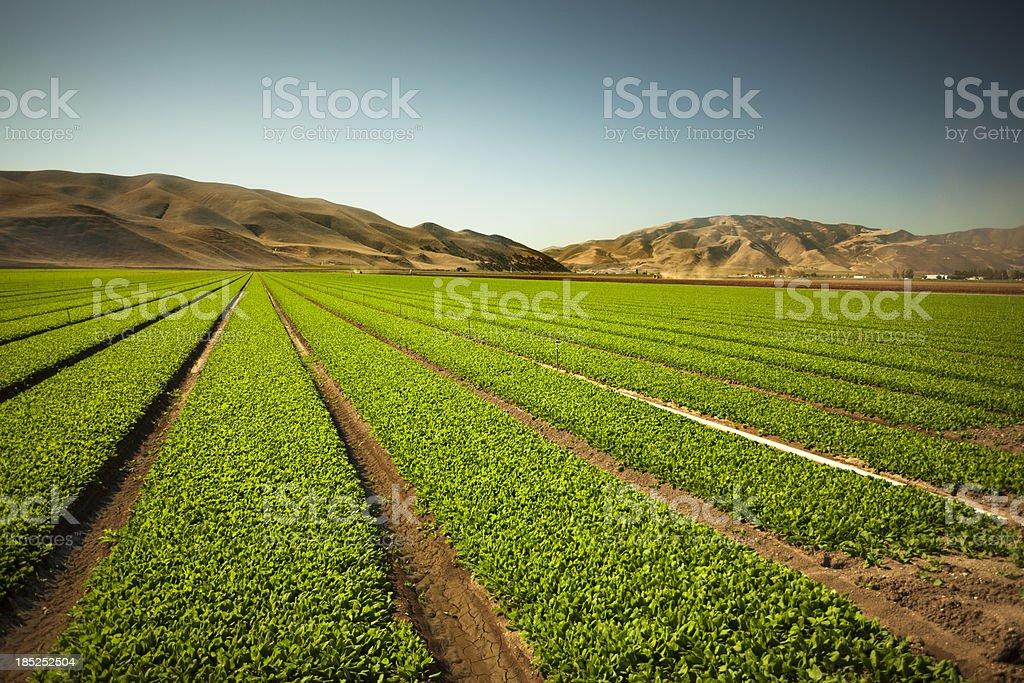 Cultivo crece en determinadas tierras fértiles - foto de stock