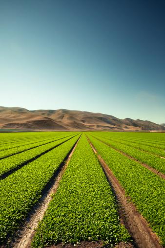 185274428 istock photo Crops grow on fertile farm land 185263424