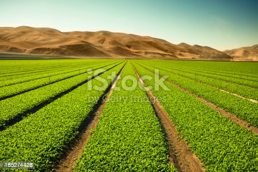 istock Crops grow on fertile farm land 185274428