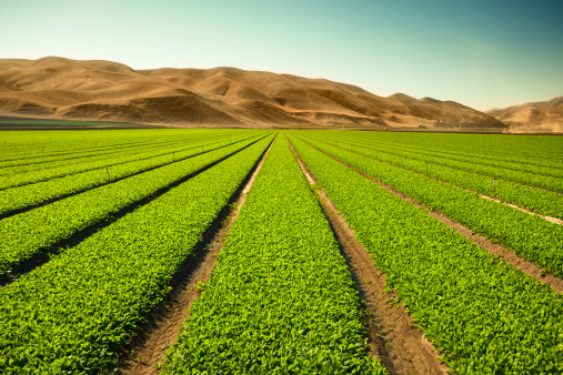 istock Crops grow on fertile farm land 185274428