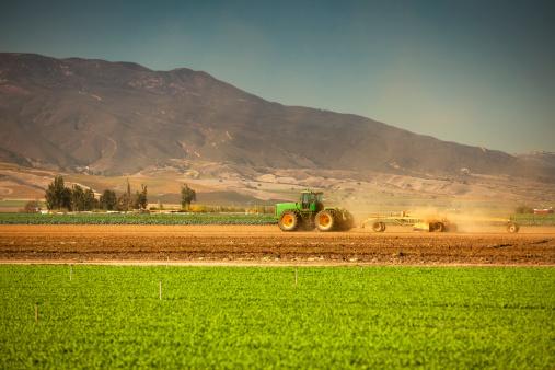 185274428 istock photo Crops grow on fertile farm land 187086375