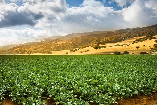 185274428 istock photo Crops grow on fertile farm land 579734212