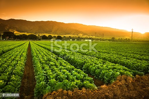istock Crops grow on fertile farm land 913504938