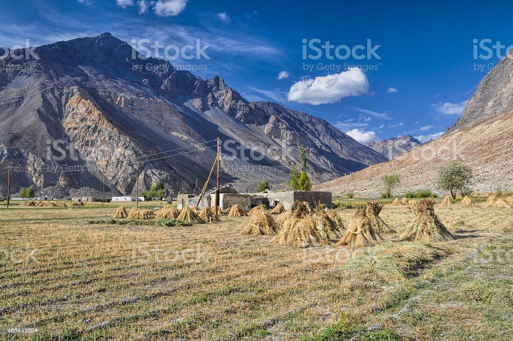 Crops in Tajikistan stock photo