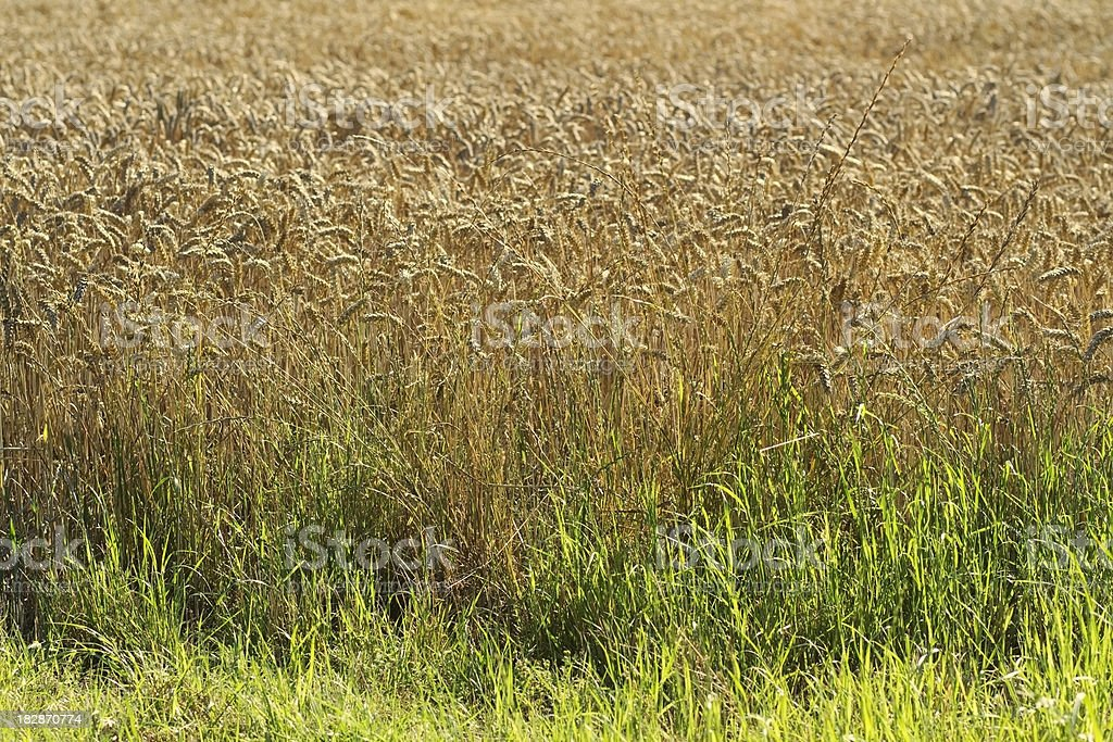 crops royalty-free stock photo