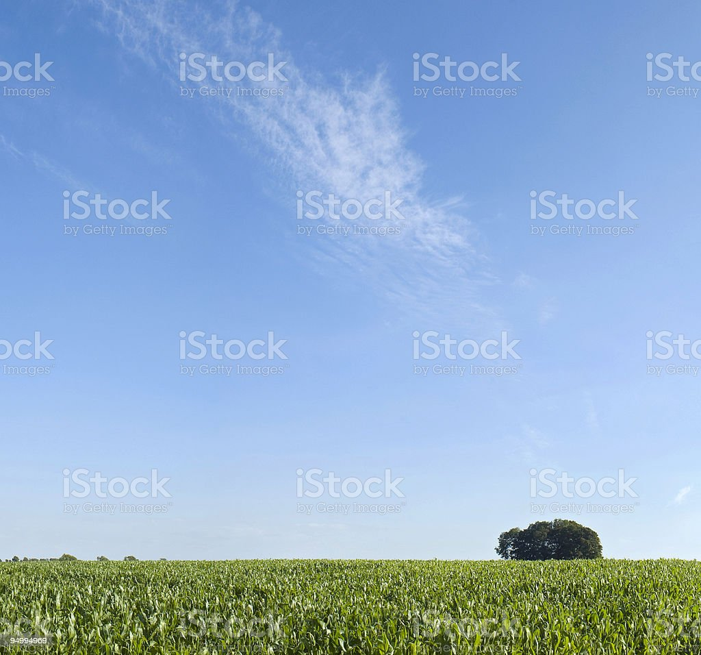 Crops. royalty-free stock photo