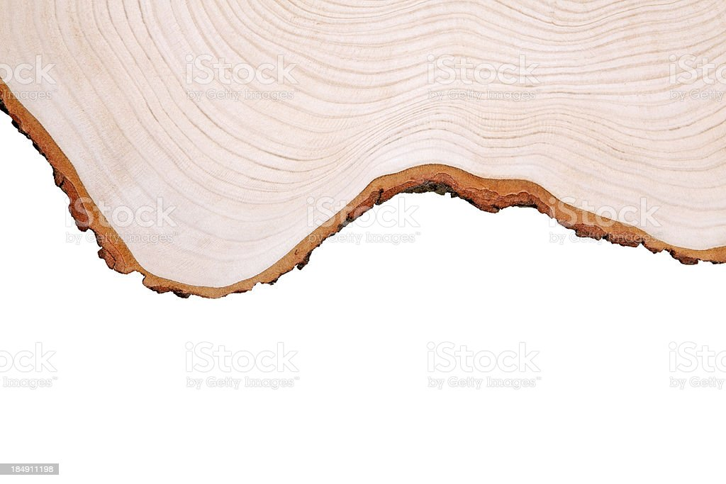 Cros section of wood stock photo