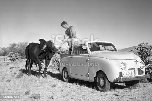 Tucson, Arizona, USA - March 31, 1948: Man feeding a Brahman bull from the back of a 1948 Crosley pickup in the Sonoran desert near Tucson, Arizona. Scanned film.