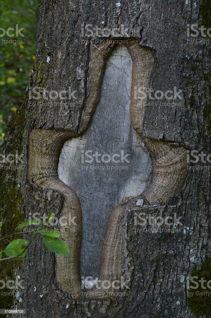 cross carved in the bark stock photo
