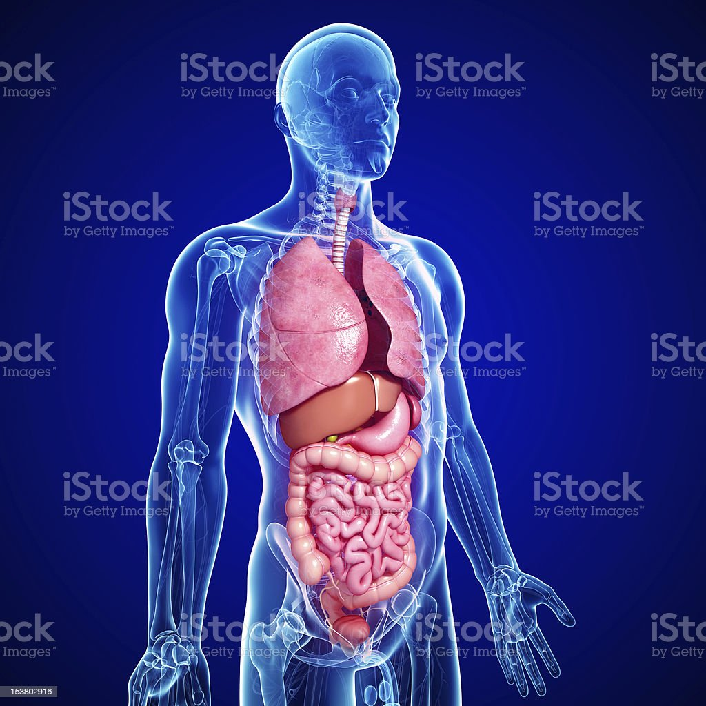cross section : all parts of human body stock photo